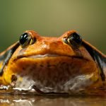 Die Eat that Frog-Methode – Prokrastination besiegen