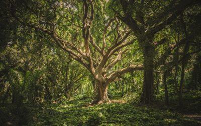 Nachhaltig lernen mit der Forest App