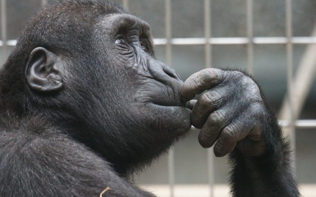 Bild: dumme Denkmuster wie ein Affe