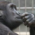 Fünf dumme Denkmuster - Scheitern durch Gedanken
